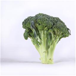 Brokoli domaci