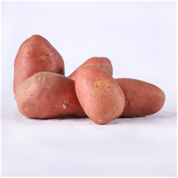 Krompir crveni mladi domaci